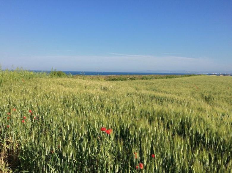 Punta Penna, Il mare e il grano, maggio 2015