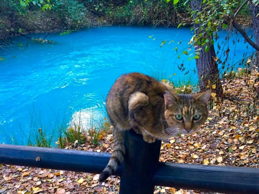 Parco del Lavino - Novembre 2015