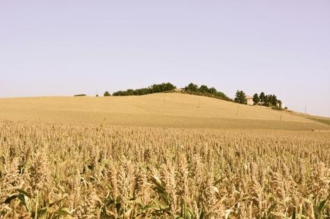 Paesaggio tra Alanno e Pietranico - agosto 2015