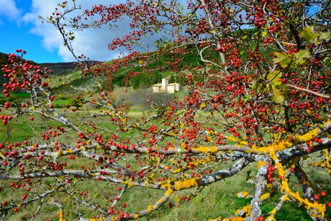 Altopiano delle Cinquemiglia - Ottobre 2015