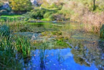 Natural Reserve of the springs of the Pescara River - Popoli, November 2015